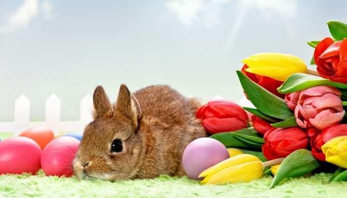 Húsvéti nyitvatartásunk